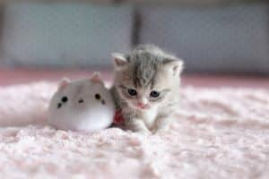 171 cute cat names