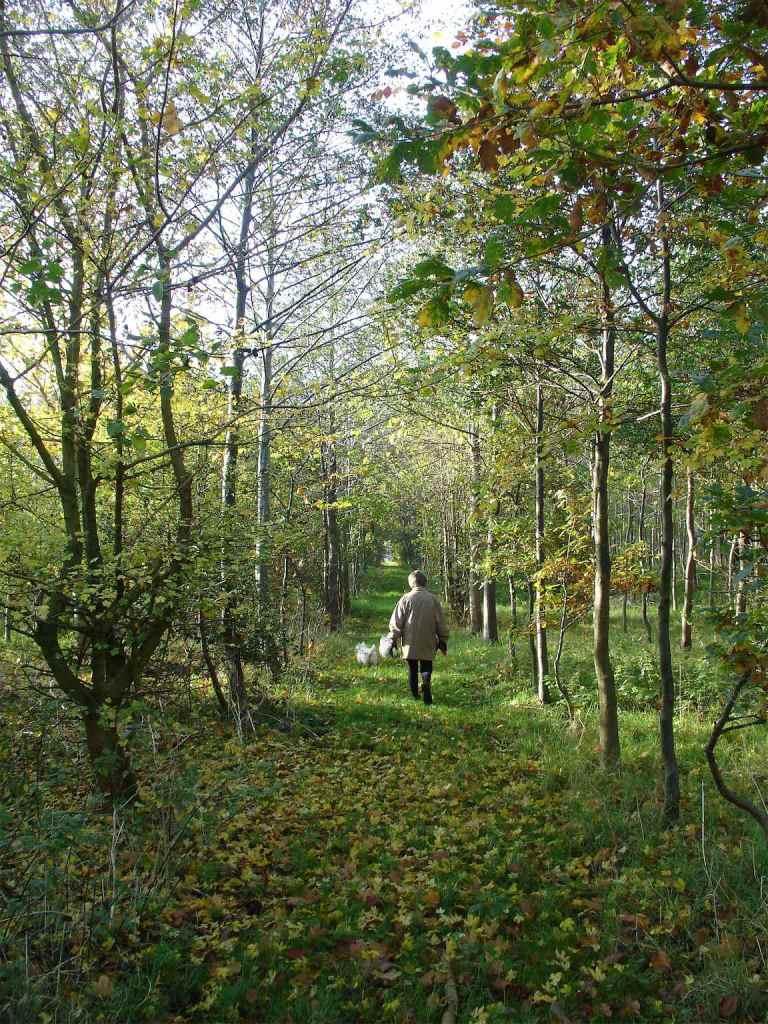 Walk in the Woods Norfolk
