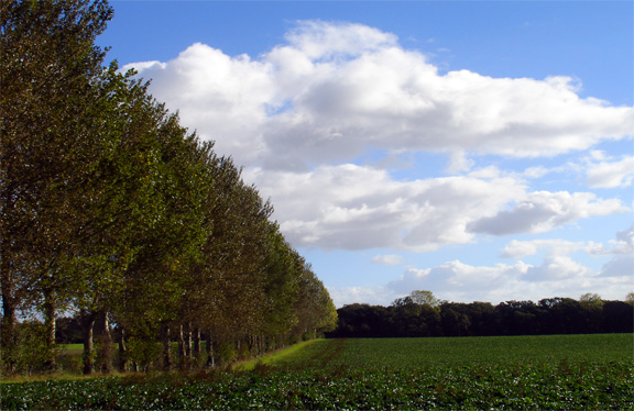 Norfolk UK field trees and blue sky with clouds