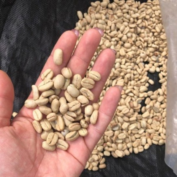 Blonde Roast Coffee Help in the Hand