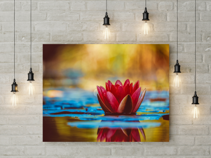 Red Water Lilly