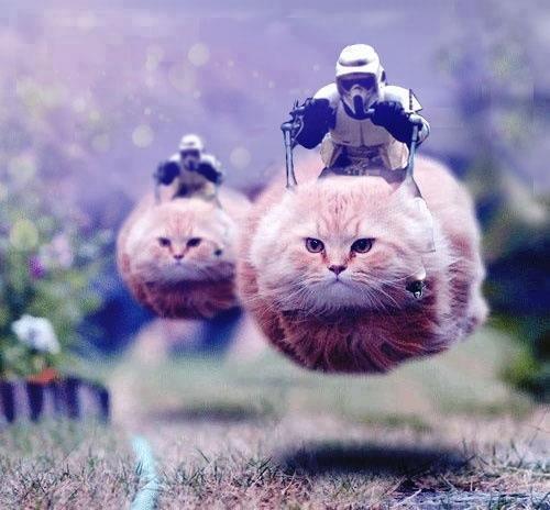 cats, 74-Z speeder bike, imperial scouts, photoshop, star wars