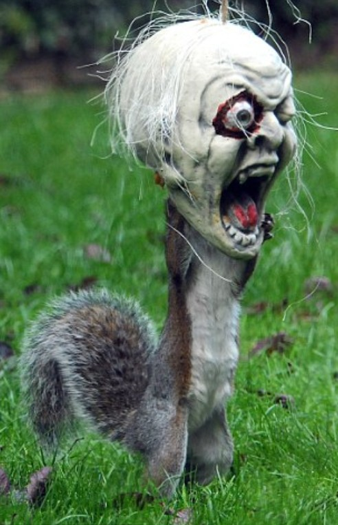 Squirrel Wearing Halloween Decoration as a Mask - Skull, Scary, England
