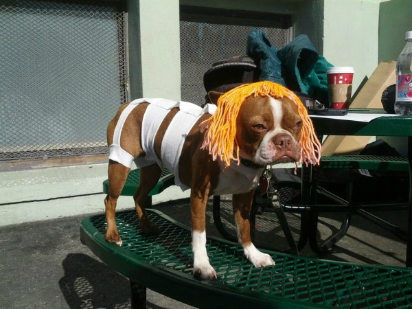 Dog Dressed as Leeloo from The Fifth Element - movie cosplay