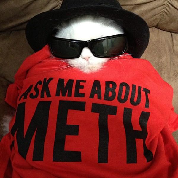 Cat as Walter White as Heisenberg - Breaking Bad Costume