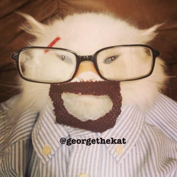 Cat in Walter White Breaking Bad Costume