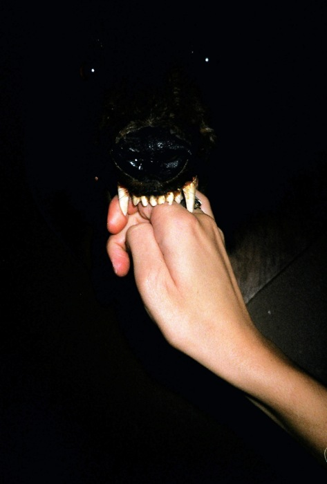 Terrifying Dog Photos - scary, vicious, canines (4)