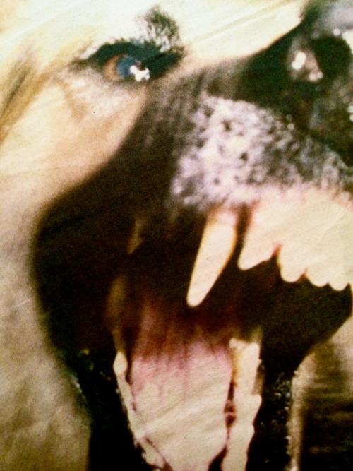 Terrifying Dog Photos - scary, vicious, canines (5)