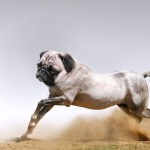 horse with pug dog head