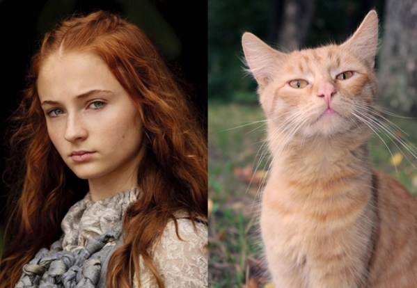 Sansa Stark - Game of Thrones Characters as Cats