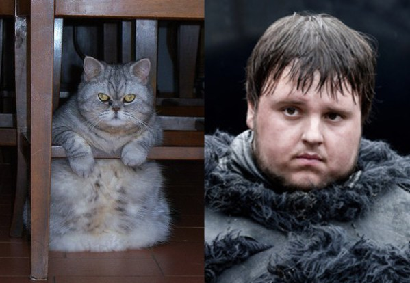 Samwell Tarly - Game of Thrones Characters as Cats