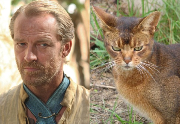 Jorah Mormont - Game of Thrones Characters as Cats