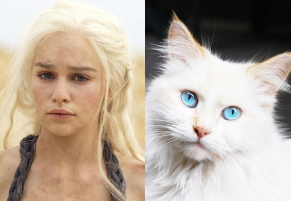 Daenerys Targaryen - Game of Thrones Characters as Cats