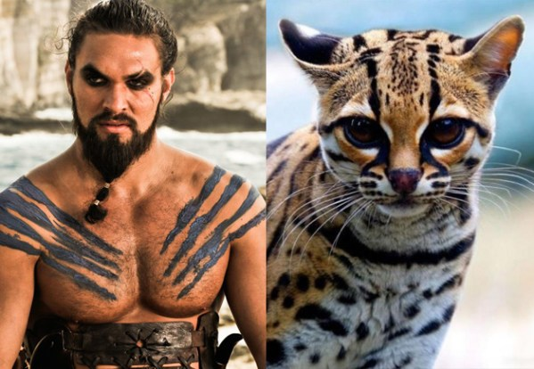 Khal Drogo - Game of Thrones Characters as Cats