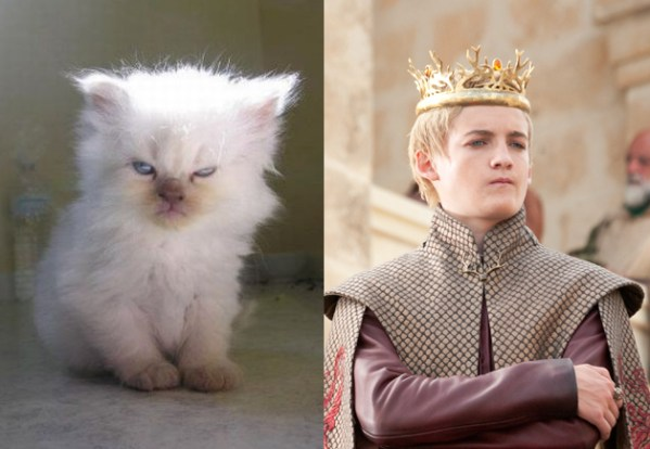 Joffrey Baratheon - Game of Thrones Characters as Cats