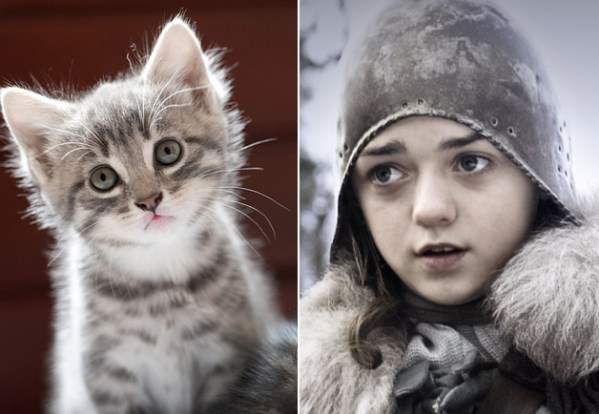 Arya Stark - Game of Thrones Characters as Cats