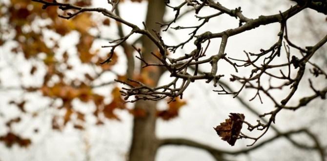 nature-leaf