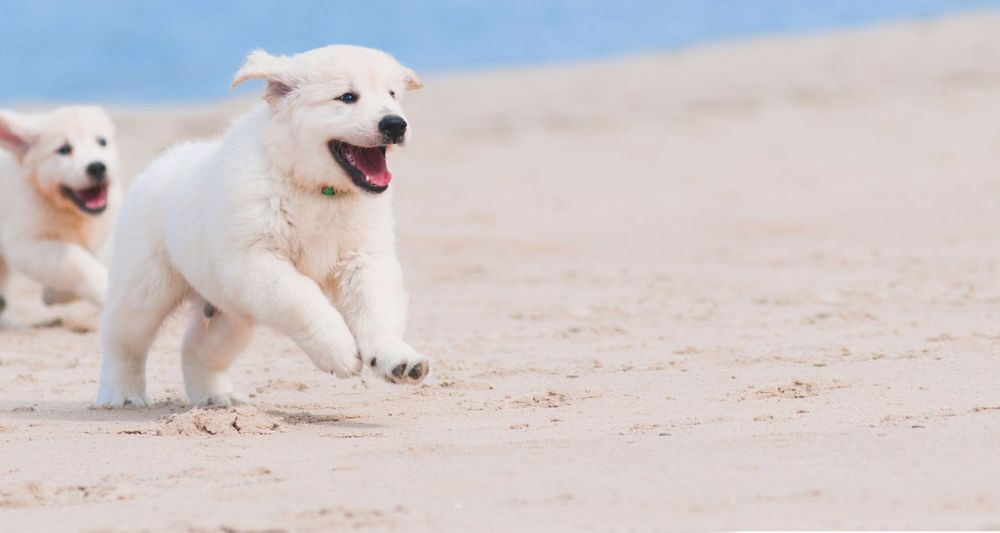 medium resolution of dogs running in the beach
