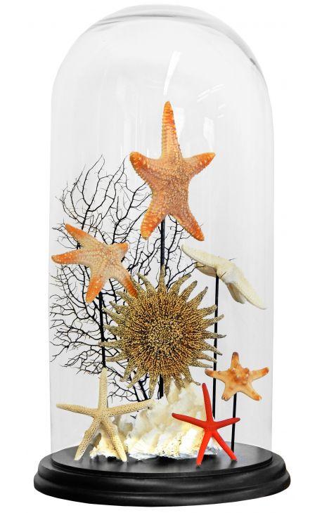 Composition de coquillages Etoiles de mer 1 sous globe en verre
