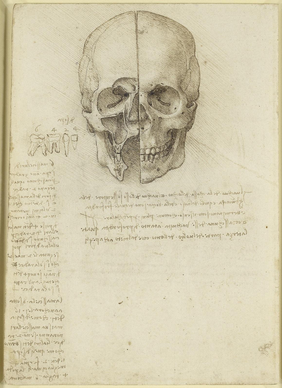 Leonardo da Vinci Vinci 1452Amboise 1519 Recto The