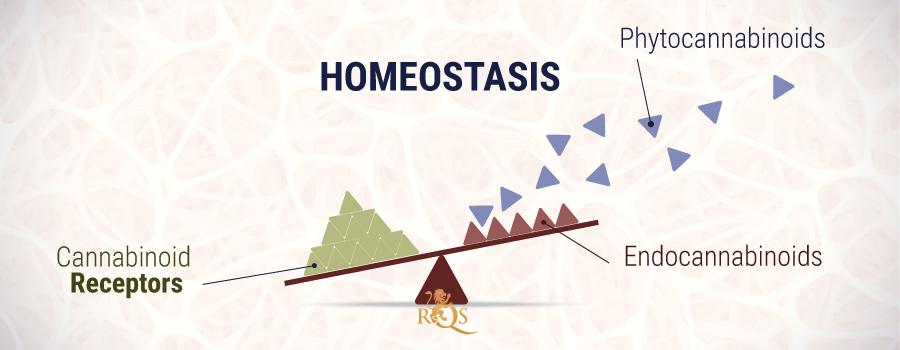 Homeostasis Fitocannabinoids And Endocannabinoids