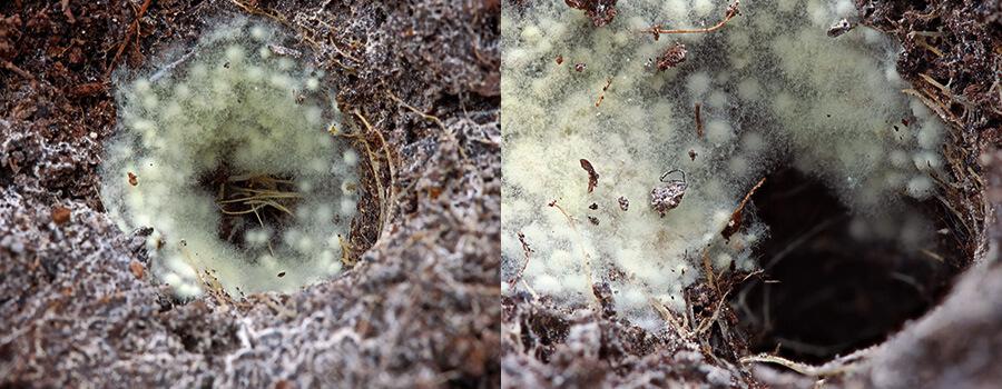 微生物と植物