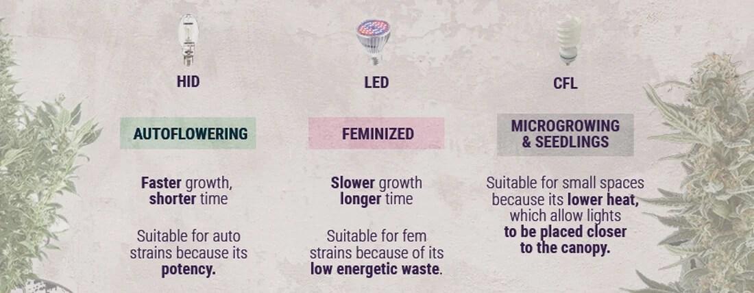 成長するときの光の種類-大麻