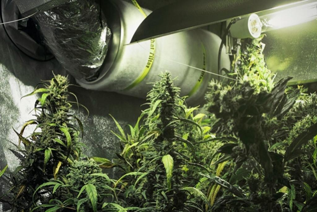 Cómo utilizar filtros de carbono en tu cultivo de marihuana - RQS Blog
