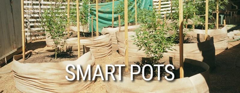 Culture de Cannabis Smart Pots
