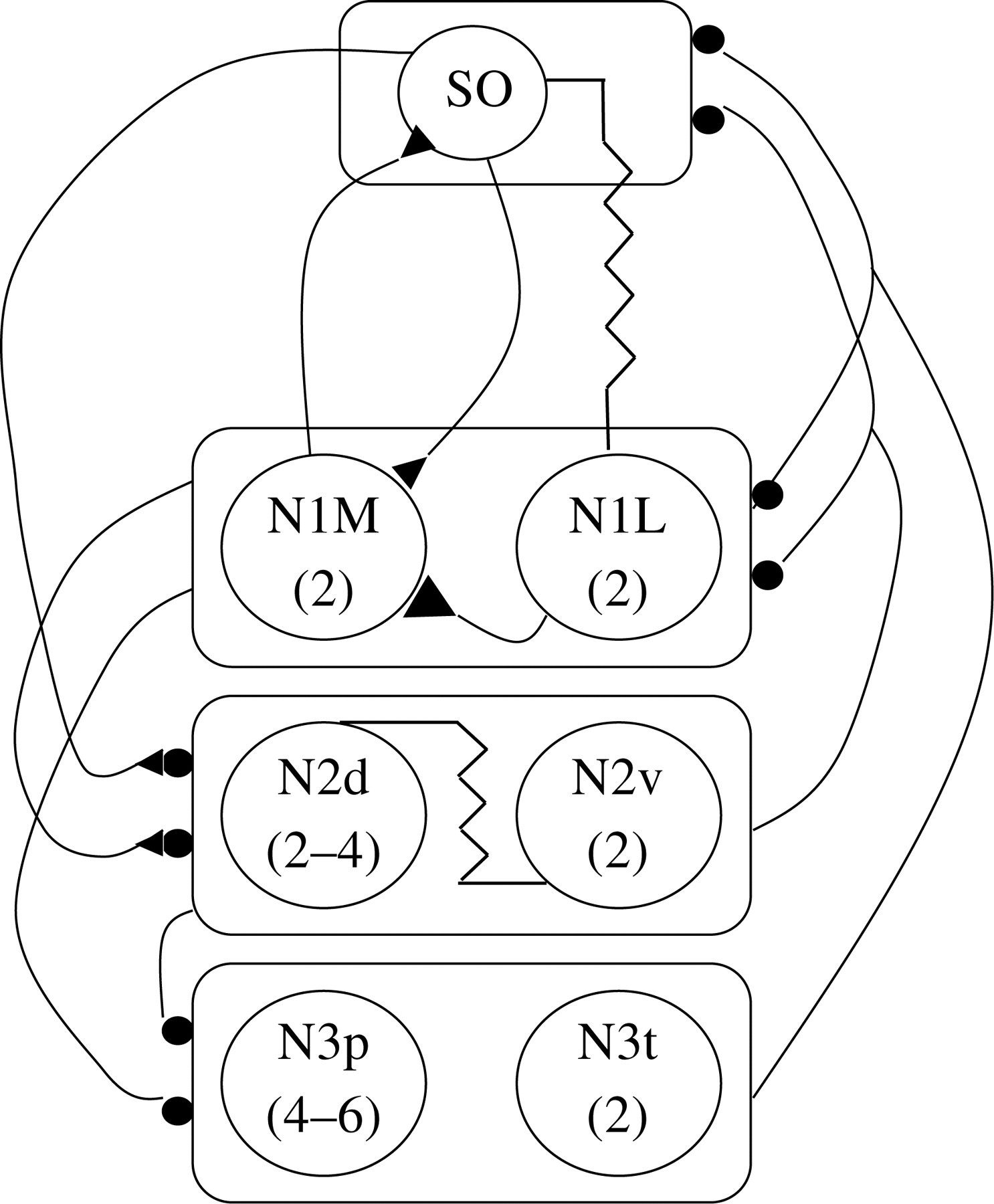 Invertebrate Central Pattern Generator Circuits