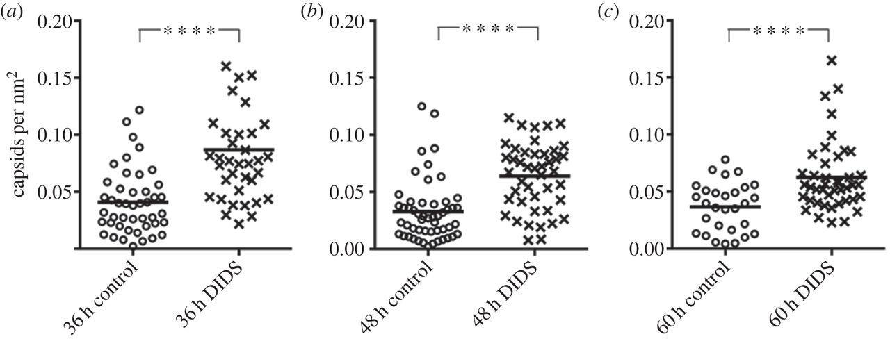 Anion homeostasis is important for non-lytic release of BK