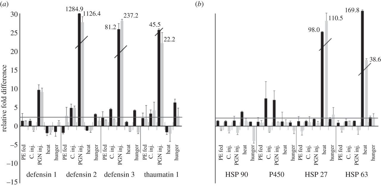 Gender- and stressor-specific microRNA expression in