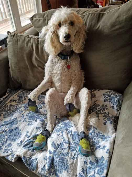 a chair for my mother big office chairs mooloo cream standard poodle