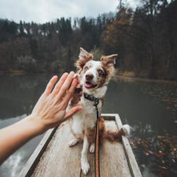 eco friendly dog
