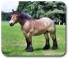 cheval_de_trait