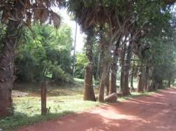 Kampot043