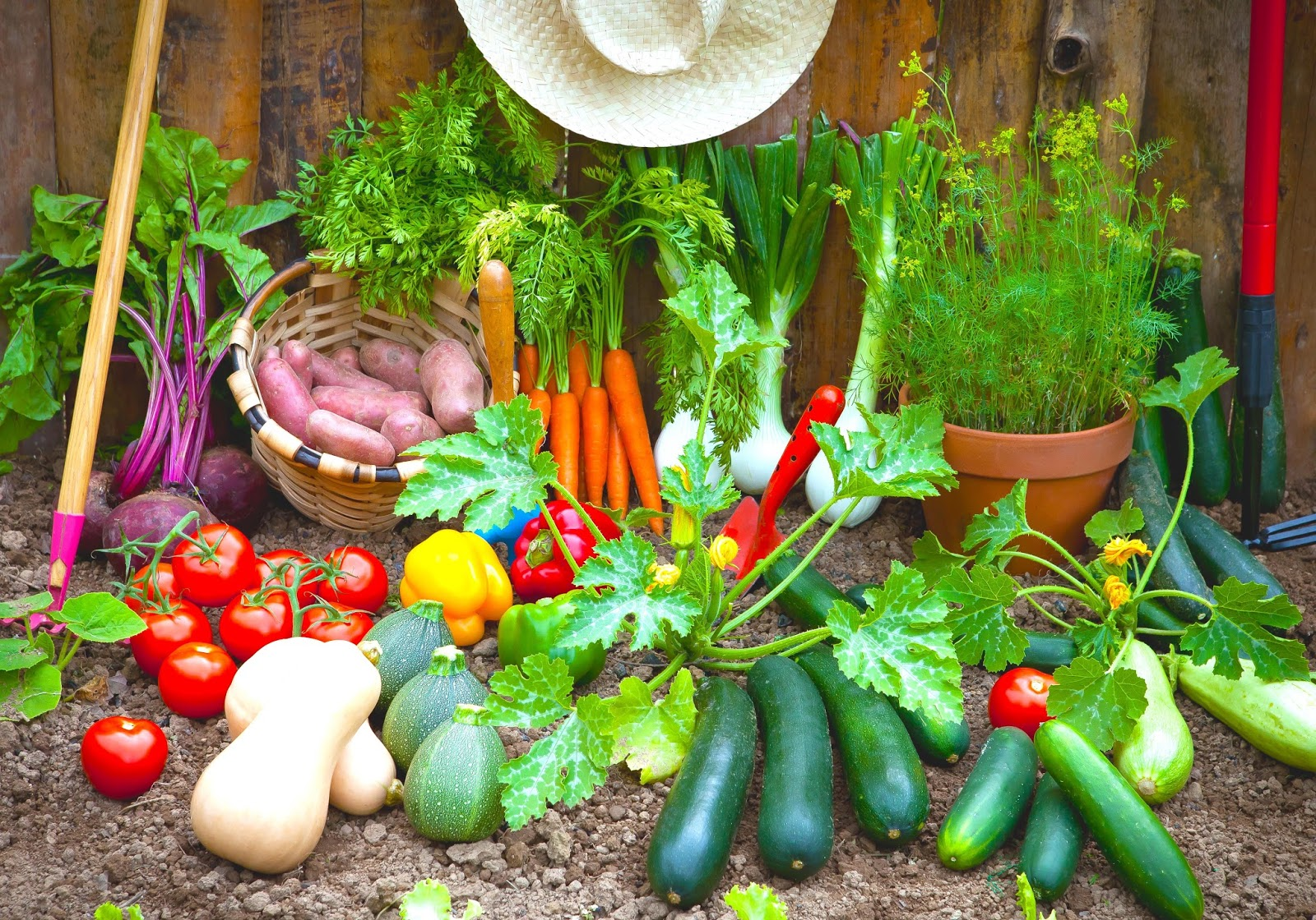 5 Planted Vegetables are Grown at Home