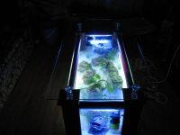 Aquarium Coffee Table For Sale | Roy Home Design