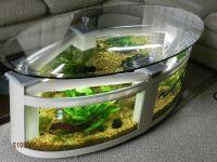 Fish Tank Coffee Table for Sale