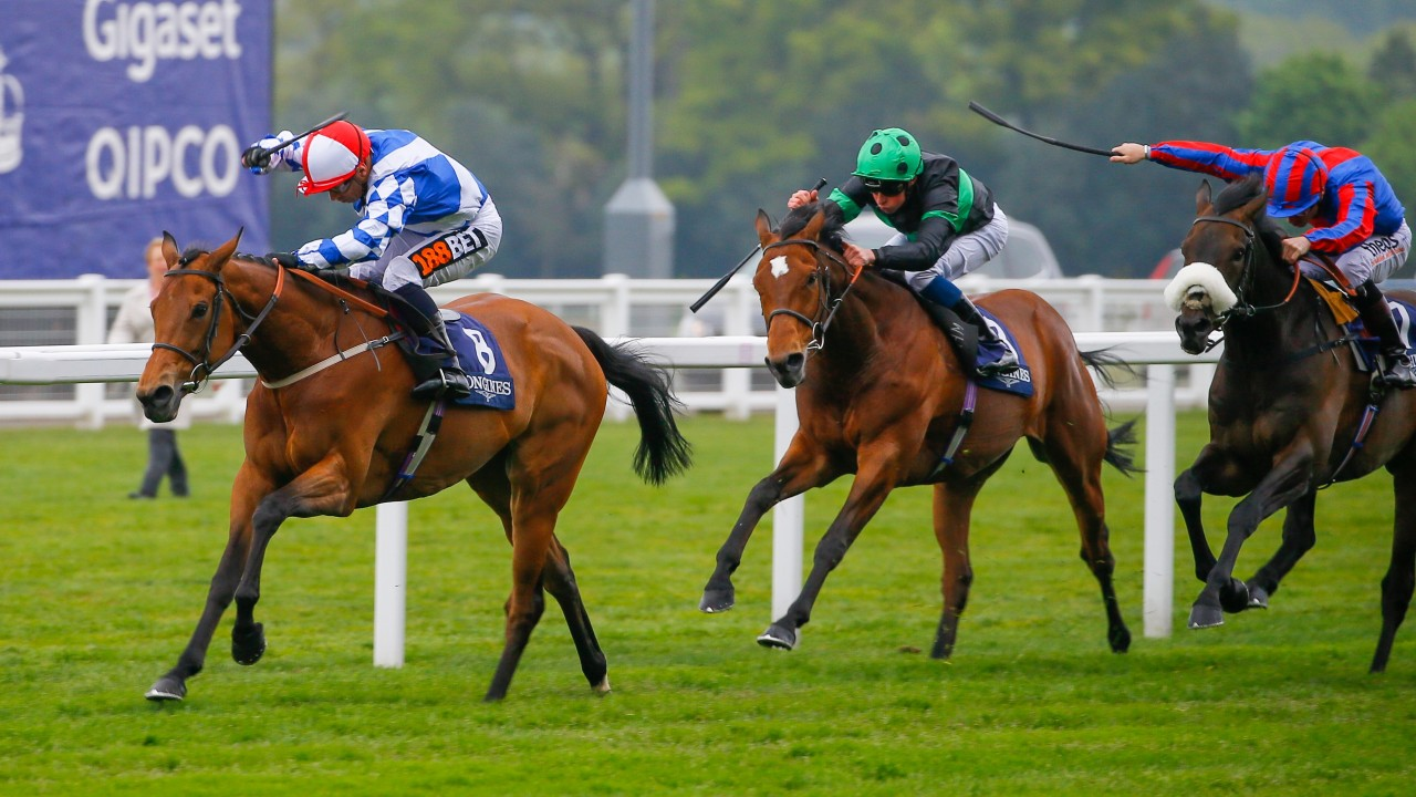 Sweet Selection Cut For Gold Cup After First Group Win