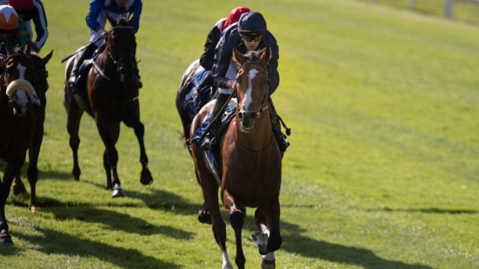 Armory: heads to the Superlative Stakes on Saturday