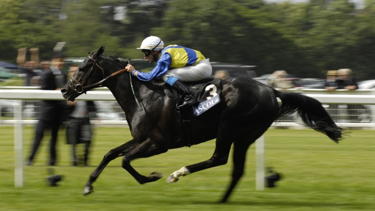 Manduro at the peak of his powers, winning the Prince of Wales's Stakes