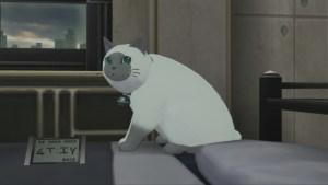 Ludgers katt Rollo är en fluffig, tjock och supersöt sidekick.