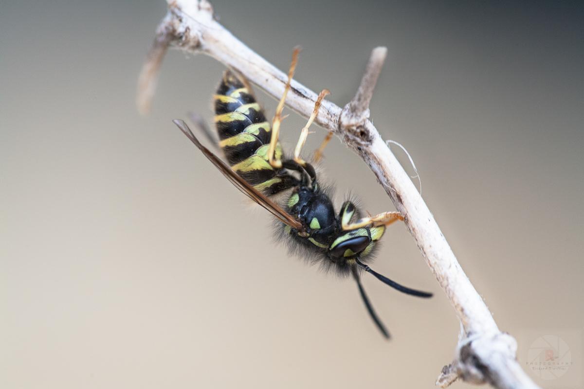 Macrofotografering: Insekter och Spindlar
