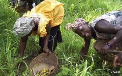 Convaincre l'Afrique: Valoriser nos produits locaux (le Karité)