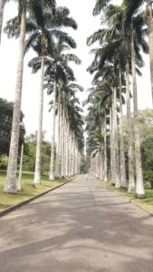 Le tourisme en Afrique de l'ouest : Lagos, Accra et Abidjan (Le jardin botanique d'Aburi)