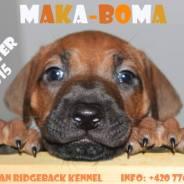 Nabídka štěňátek – chovatelská stanice MAKA-BOMA