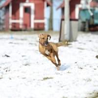1. Závody – Valentýnský coursing Sněžné – Proběhlá akce