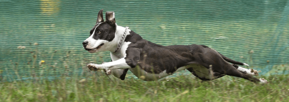 Coursing