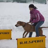Proběhlá akce – 1. Valentýnský coursing Sněžné 18.2.2017